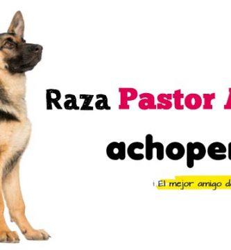 Comprar Pastor Alemán