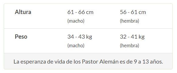Pastor Aleman Caracteristicas