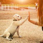 Cómo Cuidar Un Perro Recién Nacido