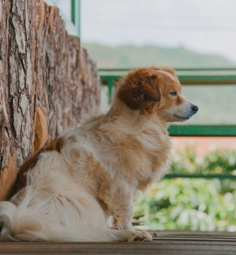 Como Entrenar A Tu Perro Para Que Logre Sentarse